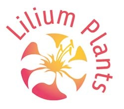 Logo inspiratie Lilium Plants