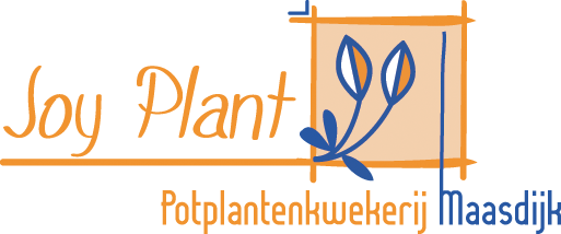 joy plant