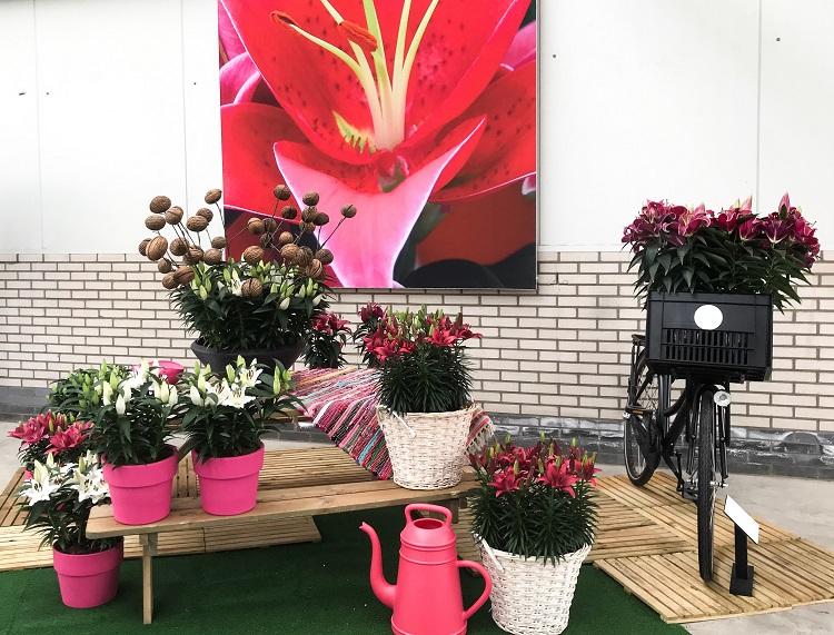 Flower Trials 2018