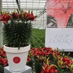 Flower Trials noviteit